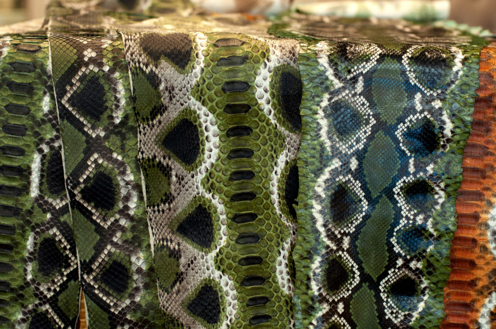 Our naponos python in forest green colour by GLENI